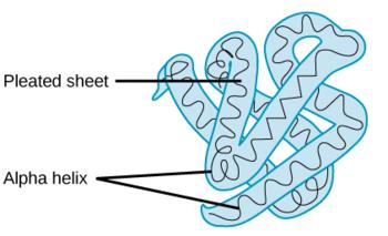 terciarna zgradba beljakovin
