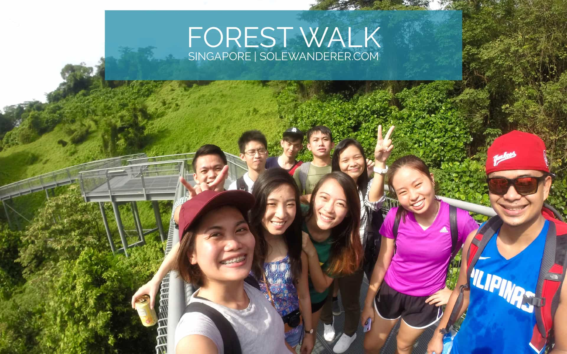 Forest Walk Singapore - The Sole Wanderer