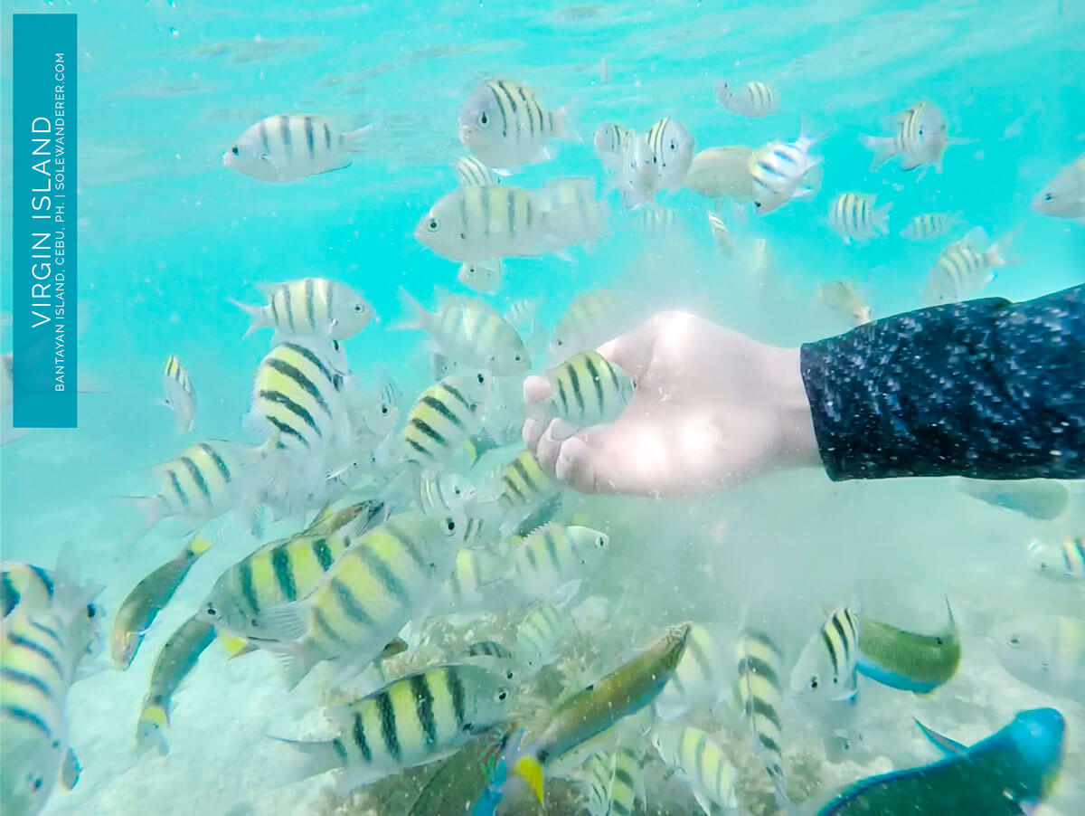 Fish Feeding Activity Virgin Island - Sole Wanderer