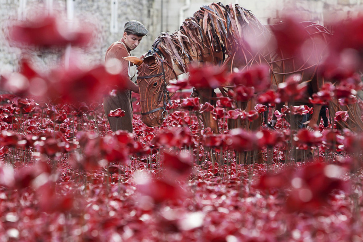 War Horse's Joey at the Tower of London (Photo: Alex Rumford)