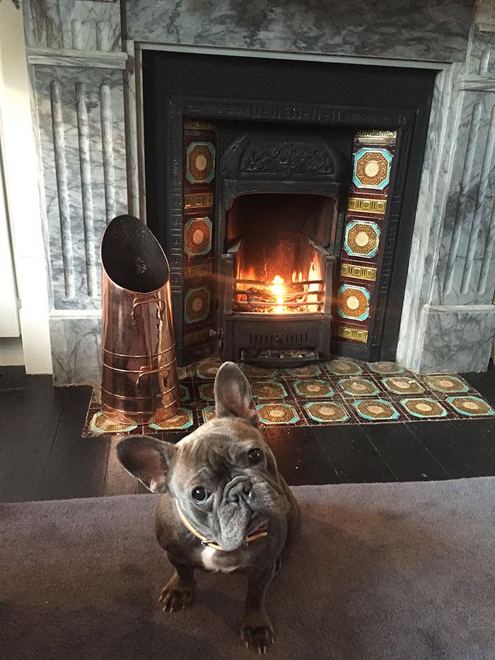Ben Forster's dog Winnie
