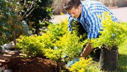 Man die planten in een groene tuin aanlegt