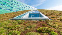 duurzaam groen dak