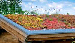Dak van een schuurtje bedekt met planten