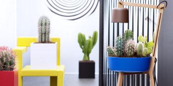 Woonplant van de maand augustus 2016: Cactus