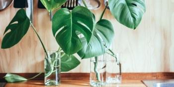 De beste luchtzuiverende planten voor thuis