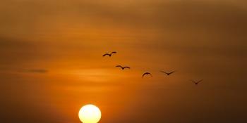 Deze zomer al zonnepanelen op je dak? Flink hogere besparingen!