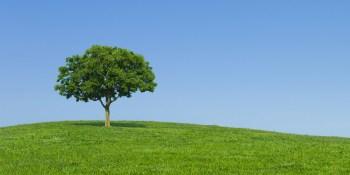 Dag van de Aarde: Tips voor een beter milieu