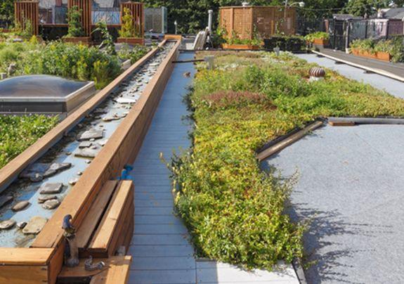 Goed onderhouden groene dak