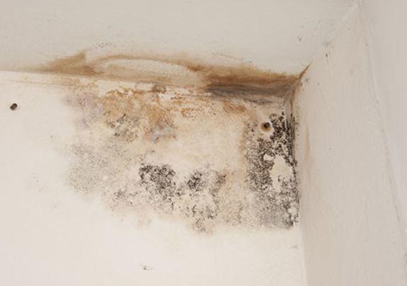 Doorslaand vocht op het plafond en de muur
