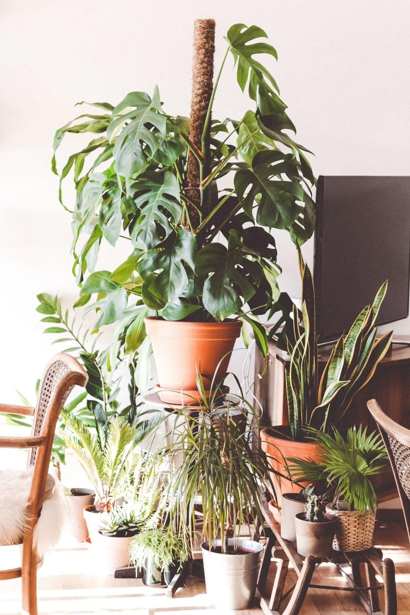 Planten en een gezond leefklimaat