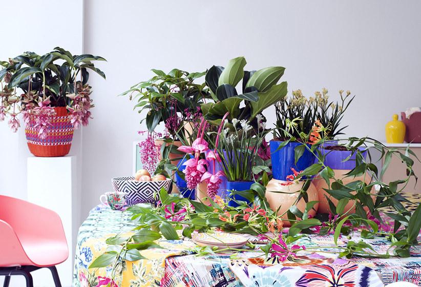 De leukste planten voor de meimaand!