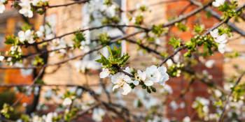 Tips & tricks voor de voorjaarsschoonmaak