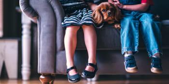 Animaux domestiques: comment aménager sa maison?