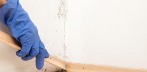 Wat te doen bij vochtproblemen in jouw huurwoning?
