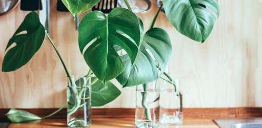 De beste luchtzuiverende planten voor binnen