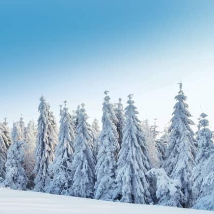 Hintergrundbild zum Winterpflegetipp