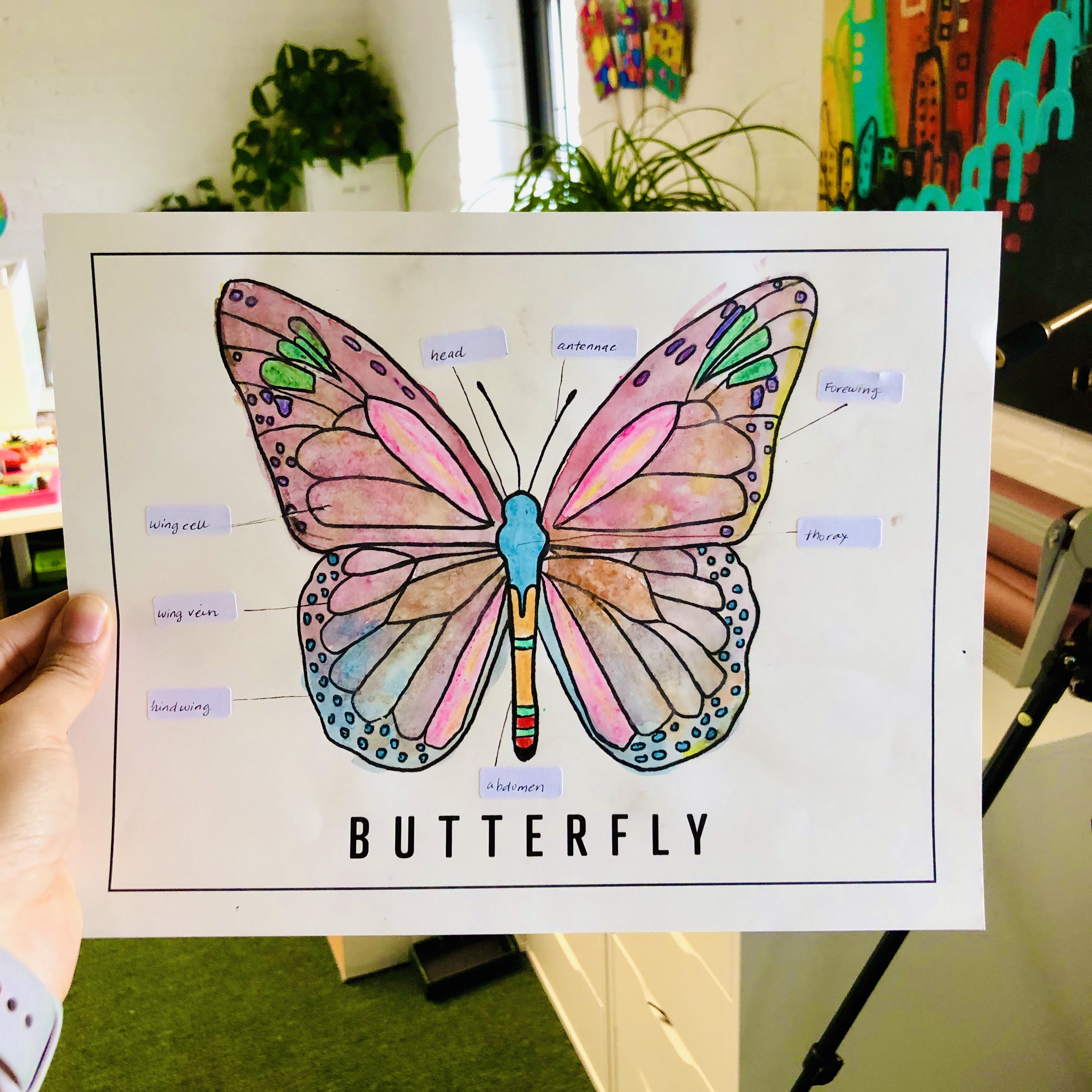 Butterfly Colorsheet