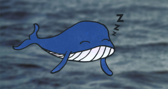 Photo of Lazy Whale
