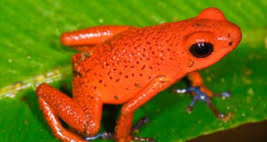 Indie Rock Mastering - Orange Frog Mastering