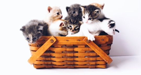 Pet-related articles - CatsPurfection