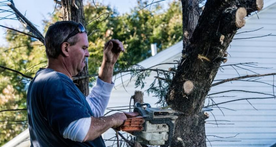 Tree Removal Service - Clipper Trees