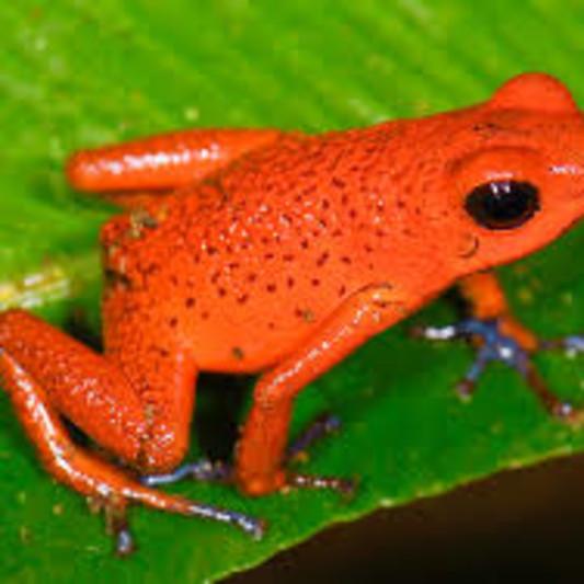Orange Frog Mastering on SoundBetter