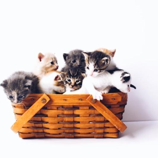 CatsPurfection on SoundBetter