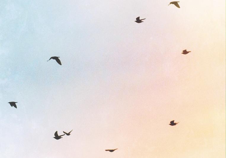 Food For Sparrows (Jordan S.) on SoundBetter