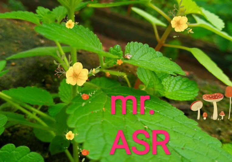 Mr. ASR on SoundBetter