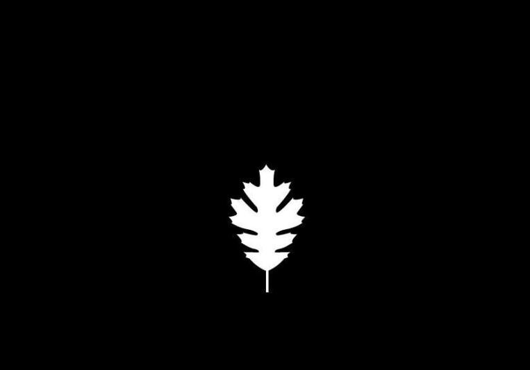 White Leaf Music Company on SoundBetter