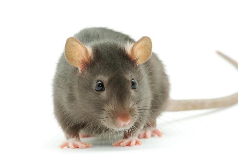 Sound Ratt on SoundBetter