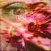 Hippo_eye2
