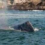 130919_WhalesGalore423