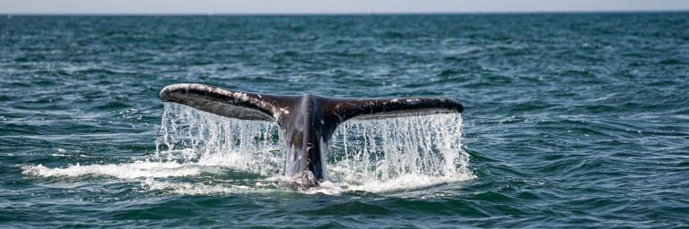 Whales & Wildlife Boat Tour
