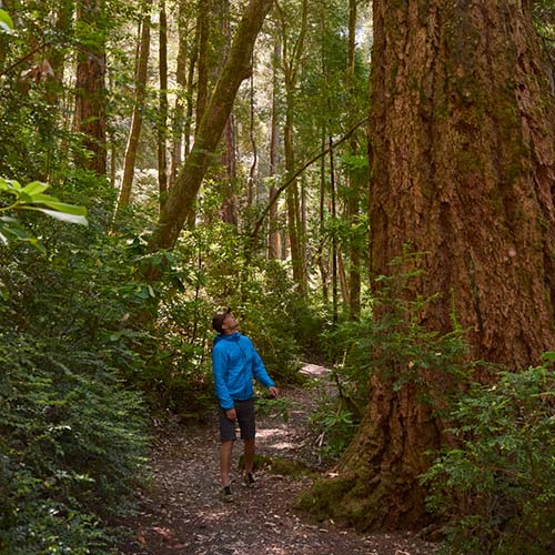 gold-beach-tour-old-growth