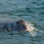 130919_WhalesGalore435