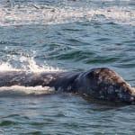 130919_WhalesGalore411