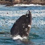 130919_WhalesGalore402