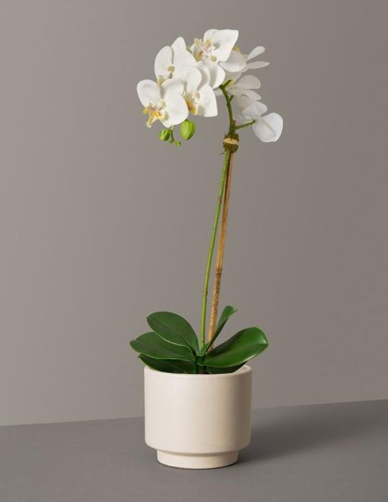 Faux Orchid Phalaenopsis from the sill
