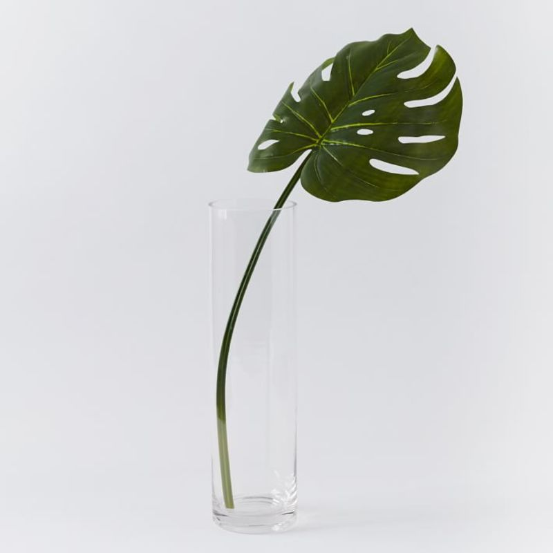 Extra Wide Monstera from West Elm
