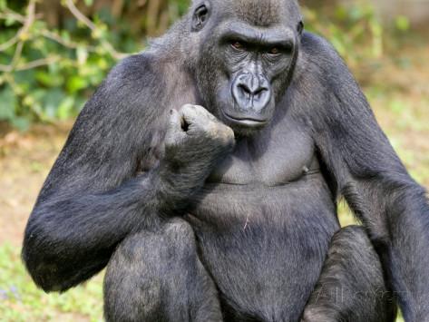 Кулак гориллы