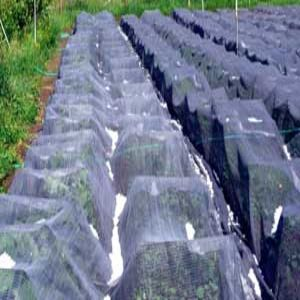 Hail Protection Netting