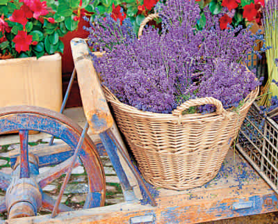 Basket of Lavender 1000 Piece Jigsaw Puzzle