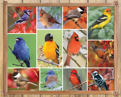 Songbirds 100 Piece Jigsaw Puzzle