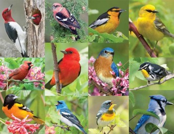 Birds of a Feather 120 Piece Jigsaw Puzzle