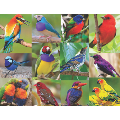 Birds of Paradise 500 Piece Jigsaw Puzzle