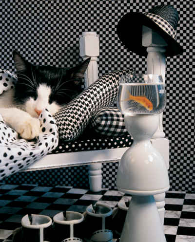 Checkerboard Cat 1000 Piece Jigsaw Puzzle