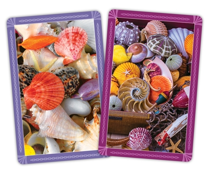 Seashells Jumbo Index Playing Cards
