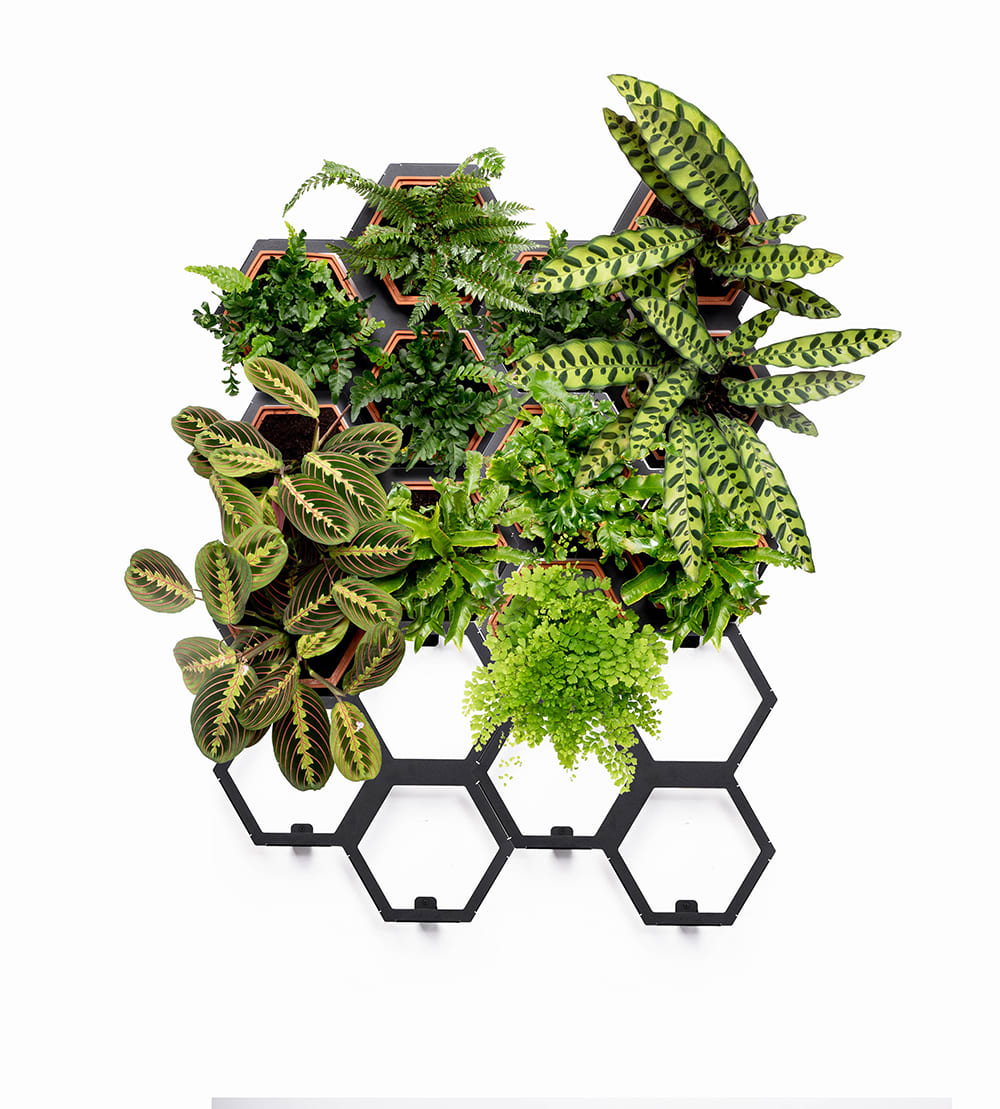 Horticus Large Living Wall Kit
